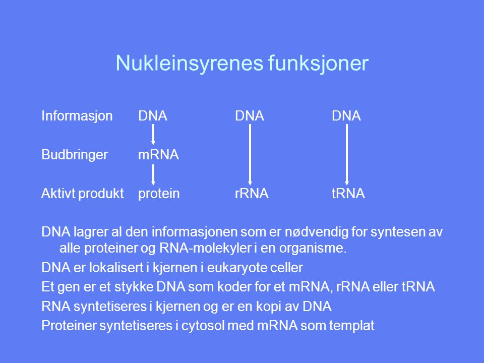 Nukleinsyrenes funksjoner InformasjonDNADNADNA BudbringermRNA Aktivt produktproteinrRNAtRNA DNA lagrer al den informasjonen som er nødvendig for synte