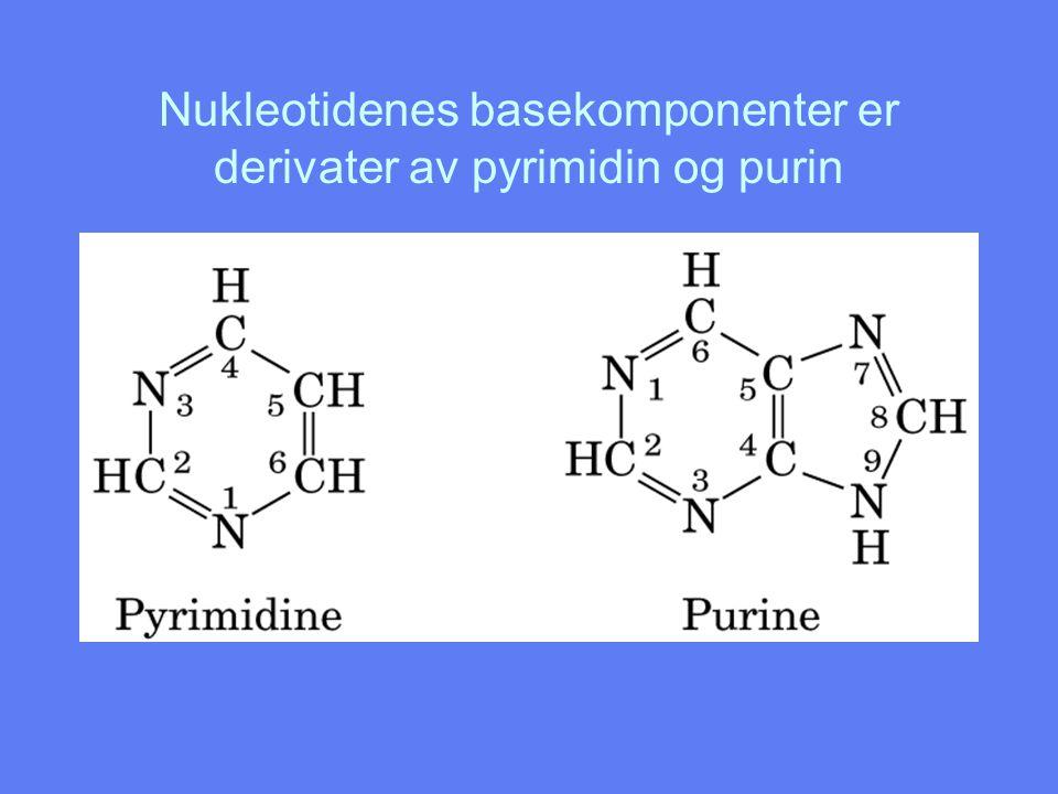Baseparing Guanin/Cytosin