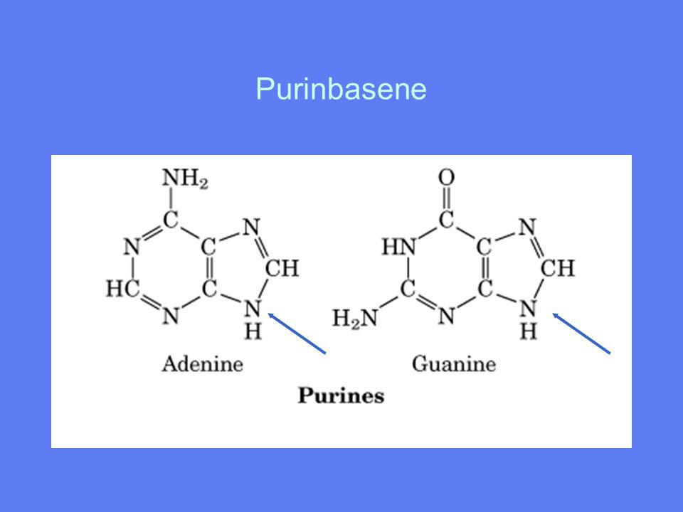 Baseparing Adenin/Thymin