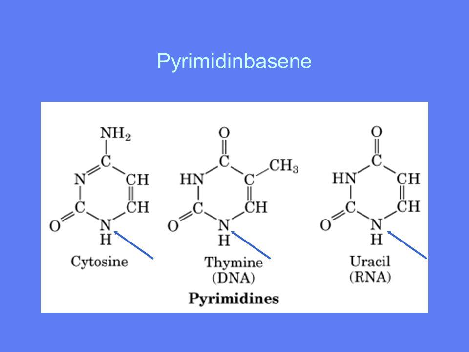 Basefordeling mellom DNA og RNA DNA Adenin (purin) Guanin (purin) Cytosin (pyrimidin) Thymin (pyrimidin Basene er koplet til C-atom nr 1' RNA Adenin Guanin Cytosin Uracil i ribosen med en N-glykosidbinding