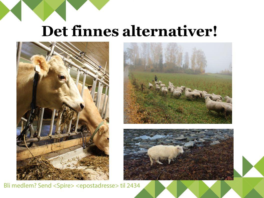 Det finnes alternativer!
