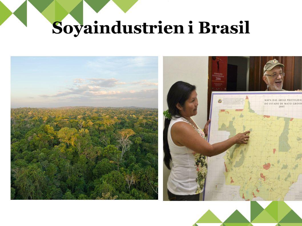 Soyaindustrien i Brasil