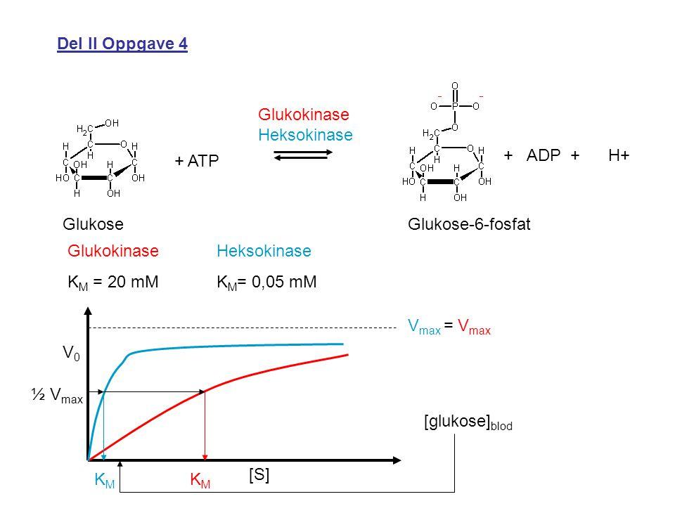 Del II Oppgave 4 + ATP + ADP + H+ GlukoseGlukose-6-fosfat Glukokinase Heksokinase Glukokinase K M = 20 mM Heksokinase K M = 0,05 mM V0V0 [S] V max = V max KMKM KMKM [glukose] blod ½ V max