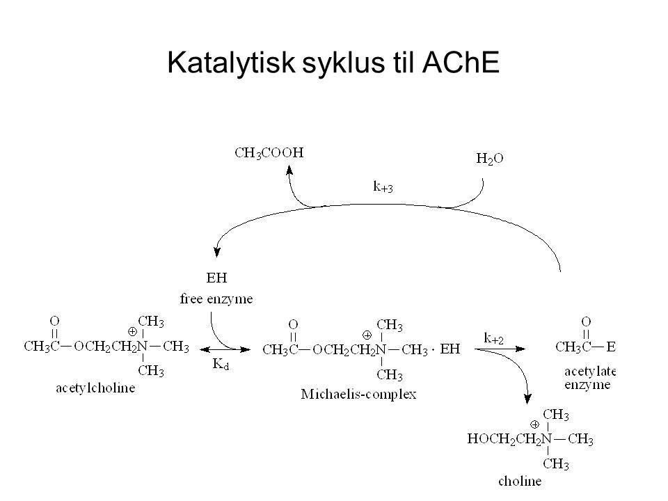 Katalytisk syklus til AChE