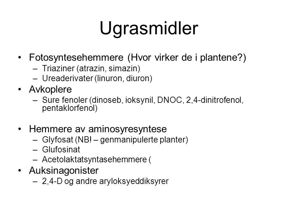 Ugrasmidler Fotosyntesehemmere (Hvor virker de i plantene ) –Triaziner (atrazin, simazin) –Ureaderivater (linuron, diuron) Avkoplere –Sure fenoler (dinoseb, ioksynil, DNOC, 2,4-dinitrofenol, pentaklorfenol) Hemmere av aminosyresyntese –Glyfosat (NB.