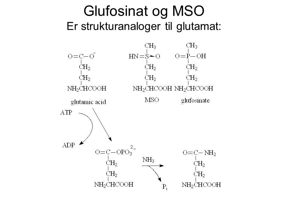 Glufosinat og MSO Er strukturanaloger til glutamat: