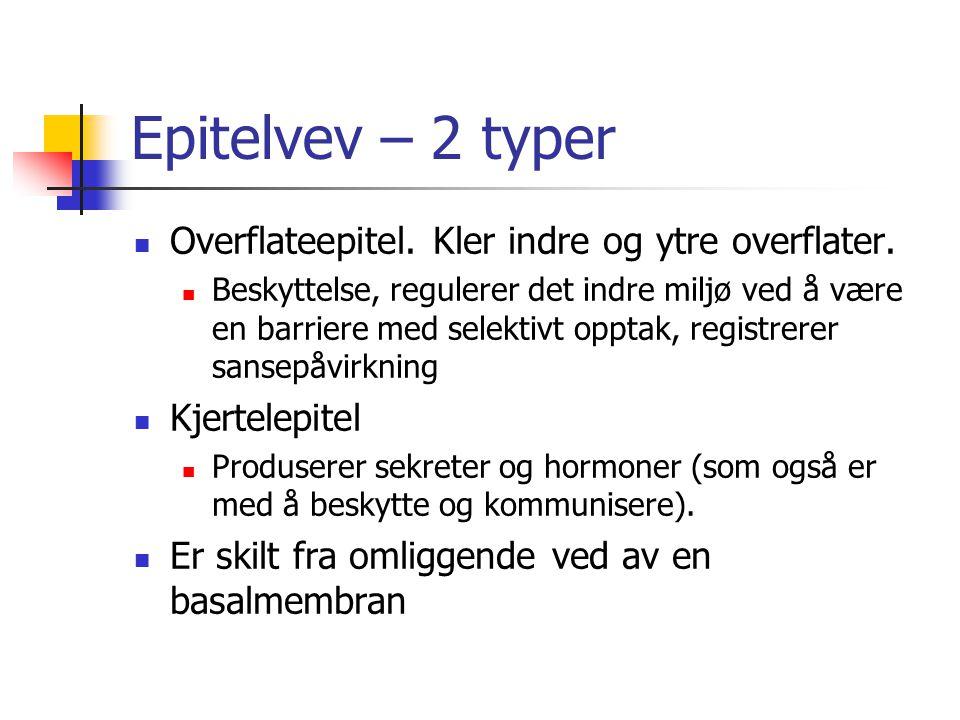 Epitelvev – 2 typer Overflateepitel. Kler indre og ytre overflater. Beskyttelse, regulerer det indre miljø ved å være en barriere med selektivt opptak