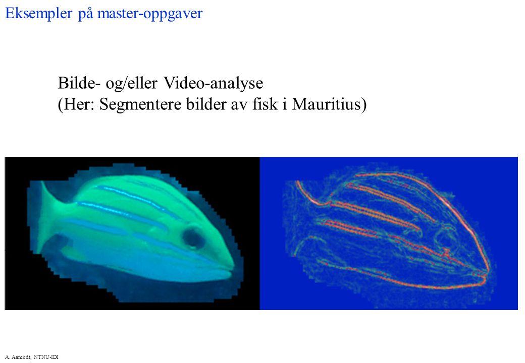 A. Aamodt, NTNU-IDI Bilde- og/eller Video-analyse (Her: Segmentere bilder av fisk i Mauritius) Eksempler på master-oppgaver