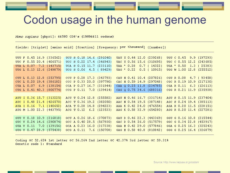 Codon usage in the human genome Source: http://www.kazusa.or.jp/codon/