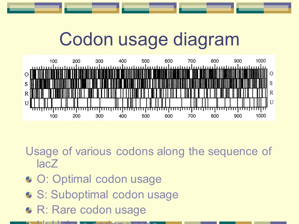 Codon usage diagram Usage of various codons along the sequence of lacZ O: Optimal codon usage S: Suboptimal codon usage R: Rare codon usage U: Unique
