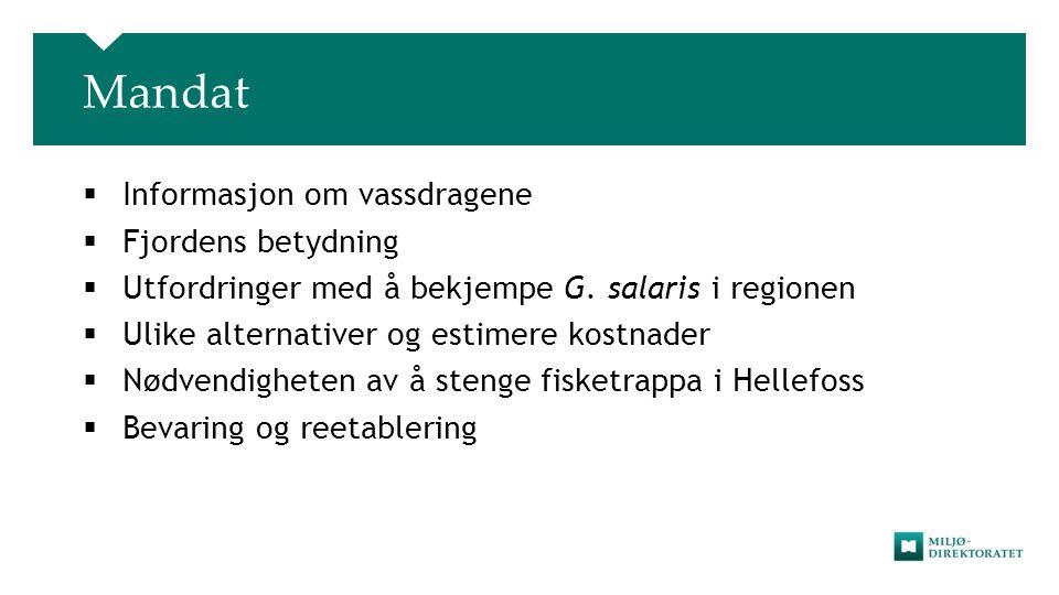 Mandat  Informasjon om vassdragene  Fjordens betydning  Utfordringer med å bekjempe G. salaris i regionen  Ulike alternativer og estimere kostnade
