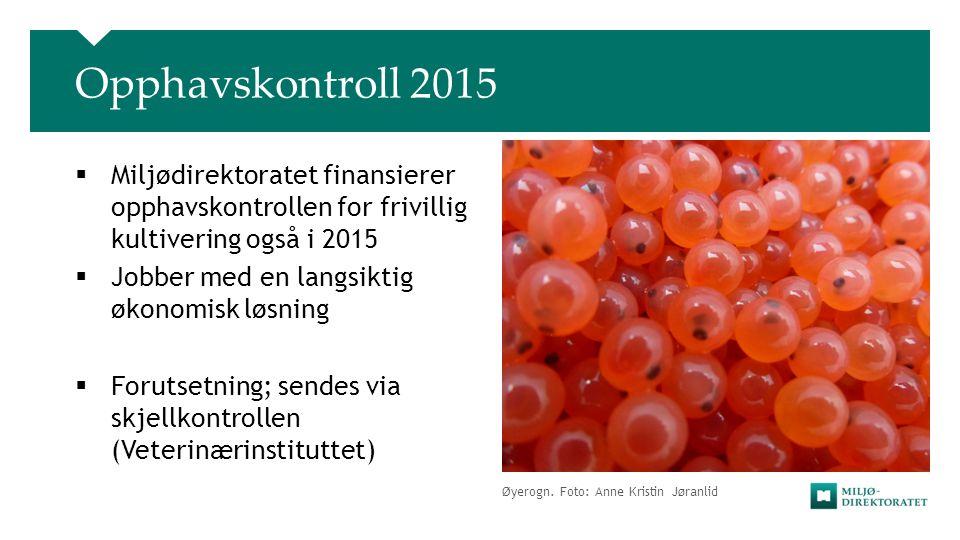 Øyerogn. Foto: Anne Kristin Jøranlid Opphavskontroll 2015  Miljødirektoratet finansierer opphavskontrollen for frivillig kultivering også i 2015  Jo