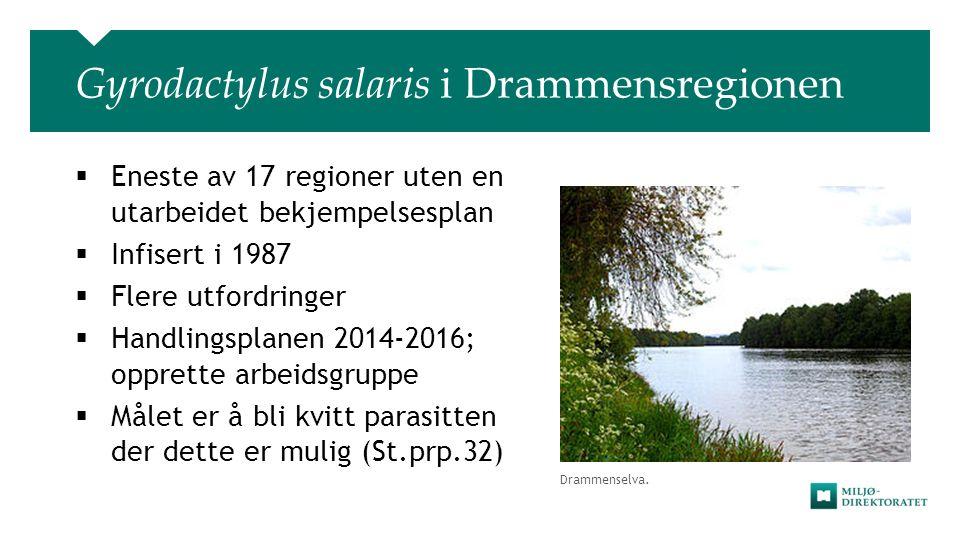 Drammenselva. Gyrodactylus salaris i Drammensregionen  Eneste av 17 regioner uten en utarbeidet bekjempelsesplan  Infisert i 1987  Flere utfordring
