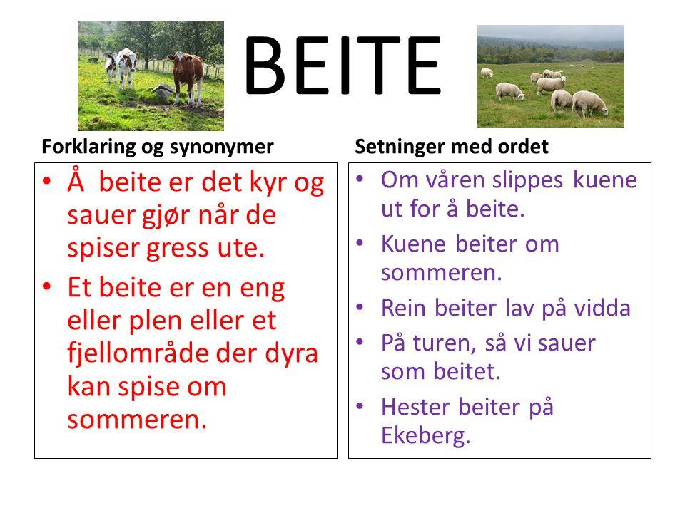 BEITE Forklaring og synonymer Å beite er det kyr og sauer gjør når de spiser gress ute. Et beite er en eng eller plen eller et fjellområde der dyra ka