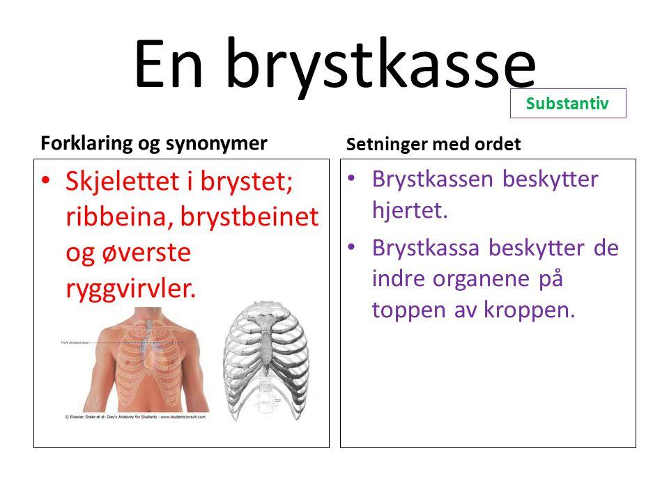 En brystkasse Forklaring og synonymer Skjelettet i brystet; ribbeina, brystbeinet og øverste ryggvirvler. Setninger med ordet Brystkassen beskytter hj
