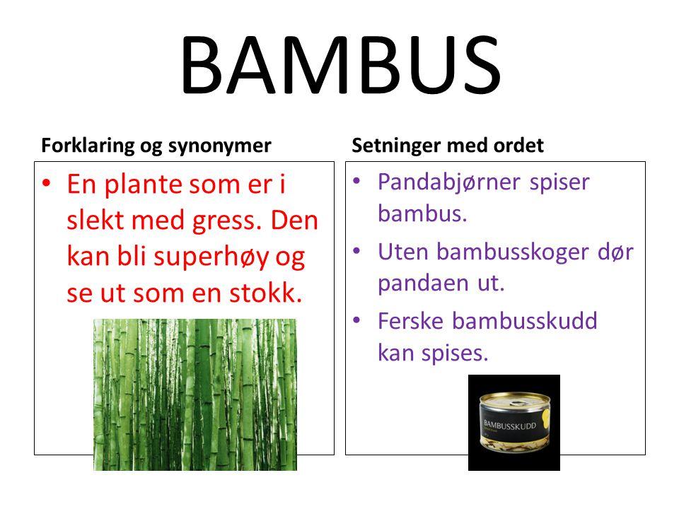BAMBUS Forklaring og synonymer En plante som er i slekt med gress. Den kan bli superhøy og se ut som en stokk. Setninger med ordet Pandabjørner spiser