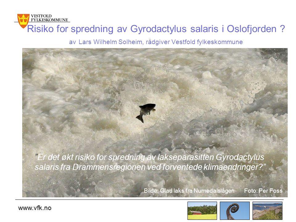 www.vfk.no Risiko for spredning av Gyrodactylus salaris i Oslofjorden .