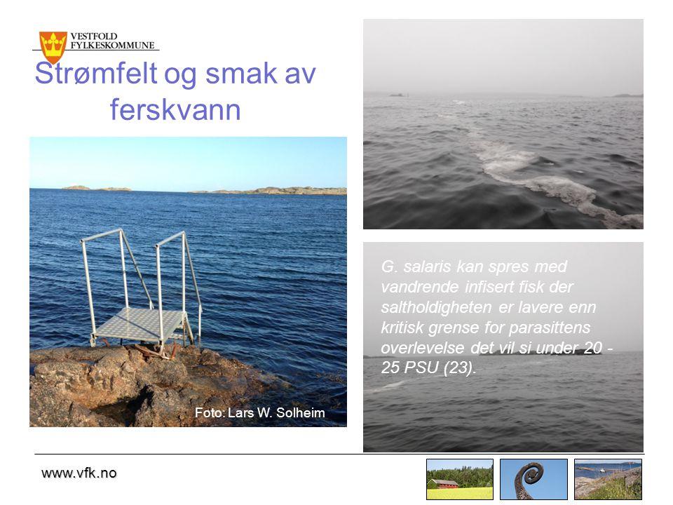 www.vfk.no Strømfelt og smak av ferskvann G.