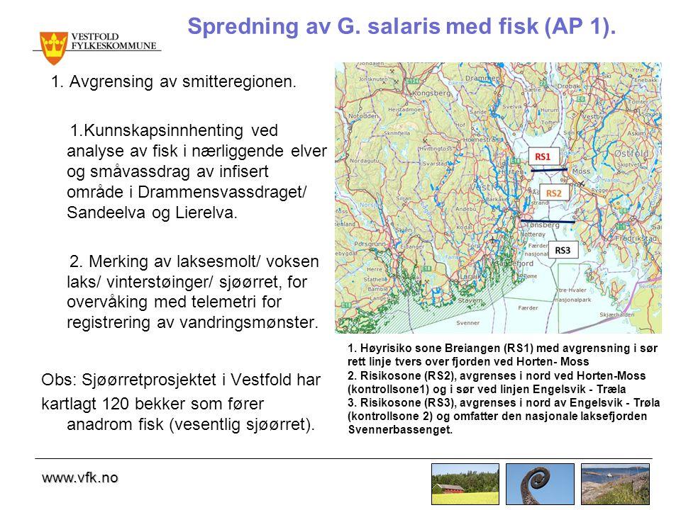 www.vfk.no Spredning av G.salaris med fisk (AP 1).