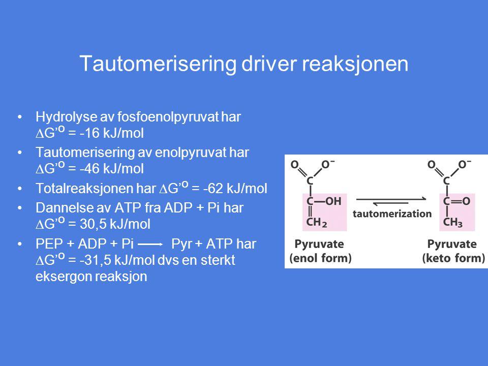 Tautomerisering driver reaksjonen Hydrolyse av fosfoenolpyruvat har  G' o = -16 kJ/mol Tautomerisering av enolpyruvat har  G' o = -46 kJ/mol Totalre