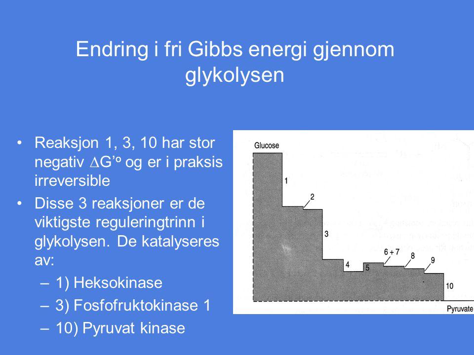 Endring i fri Gibbs energi gjennom glykolysen Reaksjon 1, 3, 10 har stor negativ  G' o og er i praksis irreversible Disse 3 reaksjoner er de viktigst