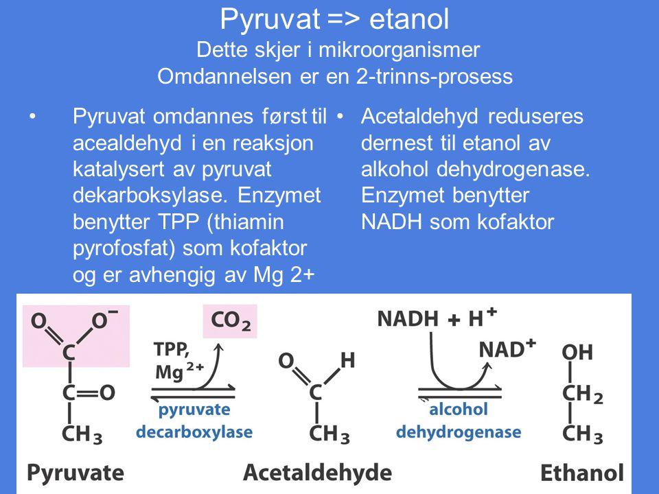 Pyruvat => etanol Dette skjer i mikroorganismer Omdannelsen er en 2-trinns-prosess Pyruvat omdannes først til acealdehyd i en reaksjon katalysert av p