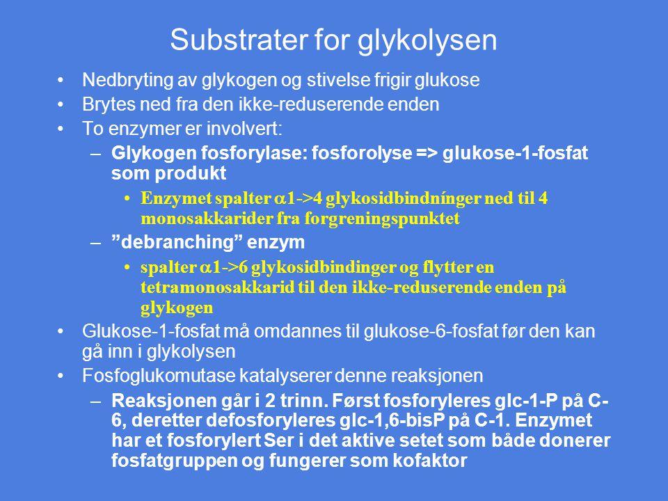 Substrater for glykolysen Nedbryting av glykogen og stivelse frigir glukose Brytes ned fra den ikke-reduserende enden To enzymer er involvert: –Glykog