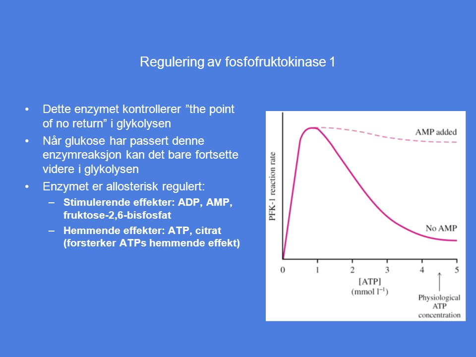 """Regulering av fosfofruktokinase 1 Dette enzymet kontrollerer """"the point of no return"""" i glykolysen Når glukose har passert denne enzymreaksjon kan det"""
