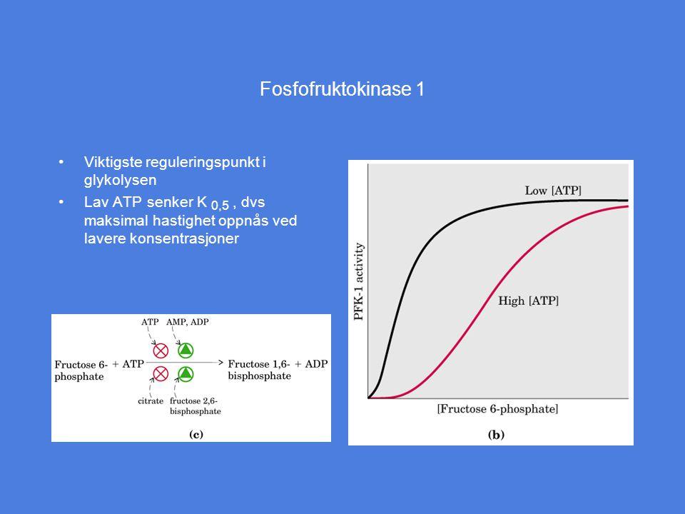 Fosfofruktokinase 1 Viktigste reguleringspunkt i glykolysen Lav ATP senker K 0,5, dvs maksimal hastighet oppnås ved lavere konsentrasjoner