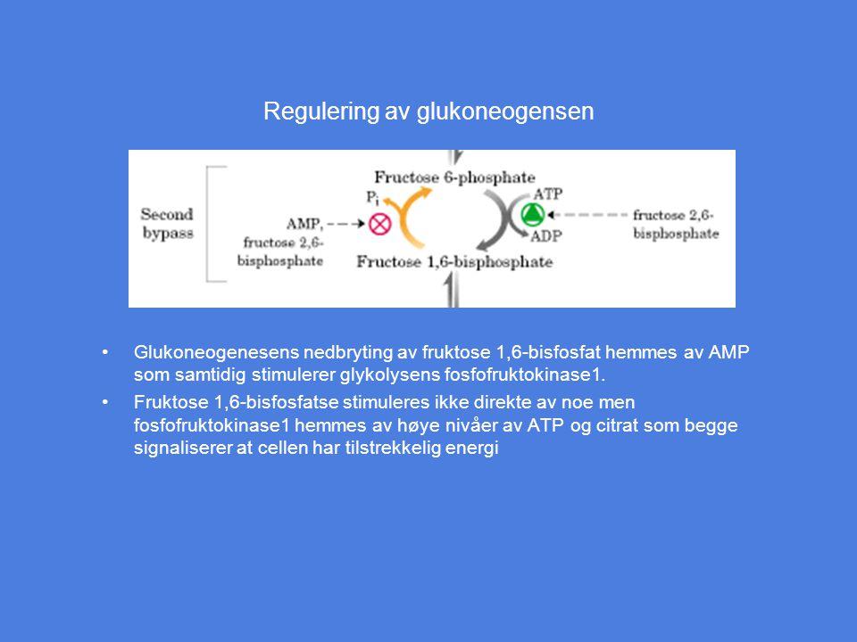 Regulering av glukoneogensen Glukoneogenesens nedbryting av fruktose 1,6-bisfosfat hemmes av AMP som samtidig stimulerer glykolysens fosfofruktokinase