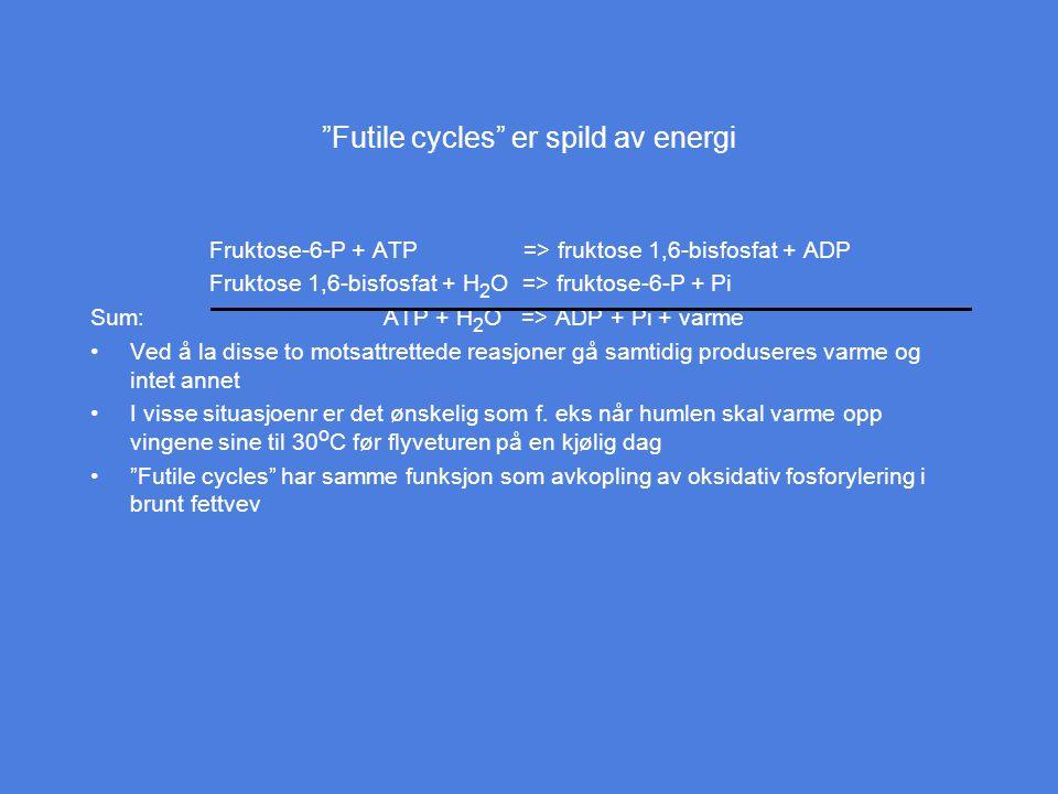 """""""Futile cycles"""" er spild av energi Fruktose-6-P + ATP => fruktose 1,6-bisfosfat + ADP Fruktose 1,6-bisfosfat + H 2 O => fruktose-6-P + Pi Sum: ATP + H"""