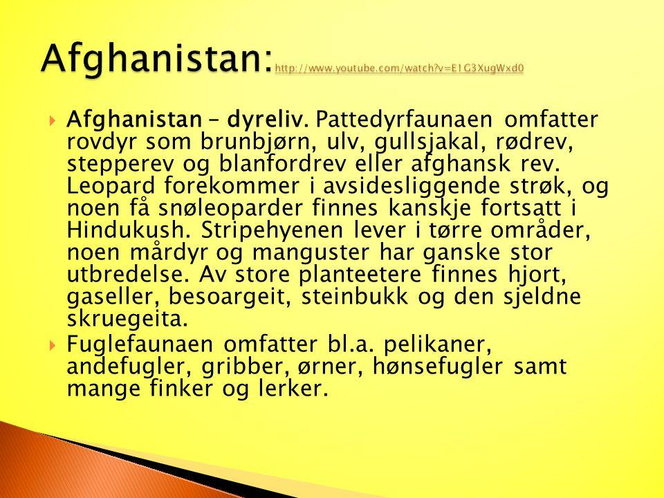  Afghanistan – dyreliv. Pattedyrfaunaen omfatter rovdyr som brunbjørn, ulv, gullsjakal, rødrev, stepperev og blanfordrev eller afghansk rev. Leopard
