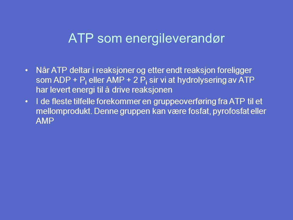 ATP som energileverandør Når ATP deltar i reaksjoner og etter endt reaksjon foreligger som ADP + P i eller AMP + 2 P i sir vi at hydrolysering av ATP har levert energi til å drive reaksjonen I de fleste tilfelle forekommer en gruppeoverføring fra ATP til et mellomprodukt.