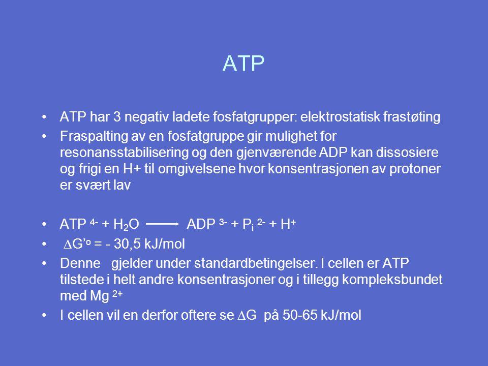 ATP ATP har 3 negativ ladete fosfatgrupper: elektrostatisk frastøting Fraspalting av en fosfatgruppe gir mulighet for resonansstabilisering og den gjenværende ADP kan dissosiere og frigi en H+ til omgivelsene hvor konsentrasjonen av protoner er svært lav ATP 4- + H 2 O ADP 3- + P i 2- + H +  G' o = - 30,5 kJ/mol Denne gjelder under standardbetingelser.