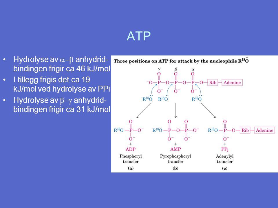 ATP Hydrolyse av  anhydrid- bindingen frigir ca 46 kJ/mol I tillegg frigis det ca 19 kJ/mol ved hydrolyse av PPi Hydrolyse av  anhydrid- bindingen frigir ca 31 kJ/mol