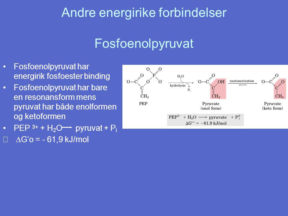 Andre energirike forbindelser Fosfoenolpyruvat Fosfoenolpyruvat har energirik fosfoester binding Fosfoenolpyruvat har bare en resonansform mens pyruvat har både enolformen og ketoformen PEP 3+ + H 2 O pyruvat + P i  G'o = - 61,9 kJ/mol