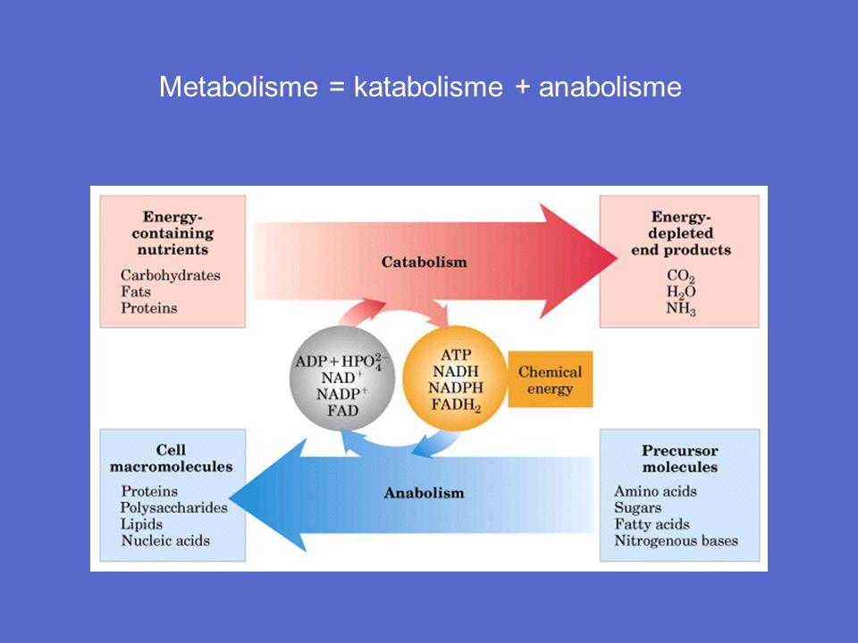 Metabolisme = katabolisme + anabolisme