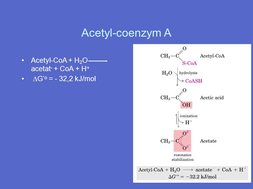 Acetyl-coenzym A Acetyl-CoA + H 2 O acetat - + CoA + H +  G' o = - 32,2 kJ/mol