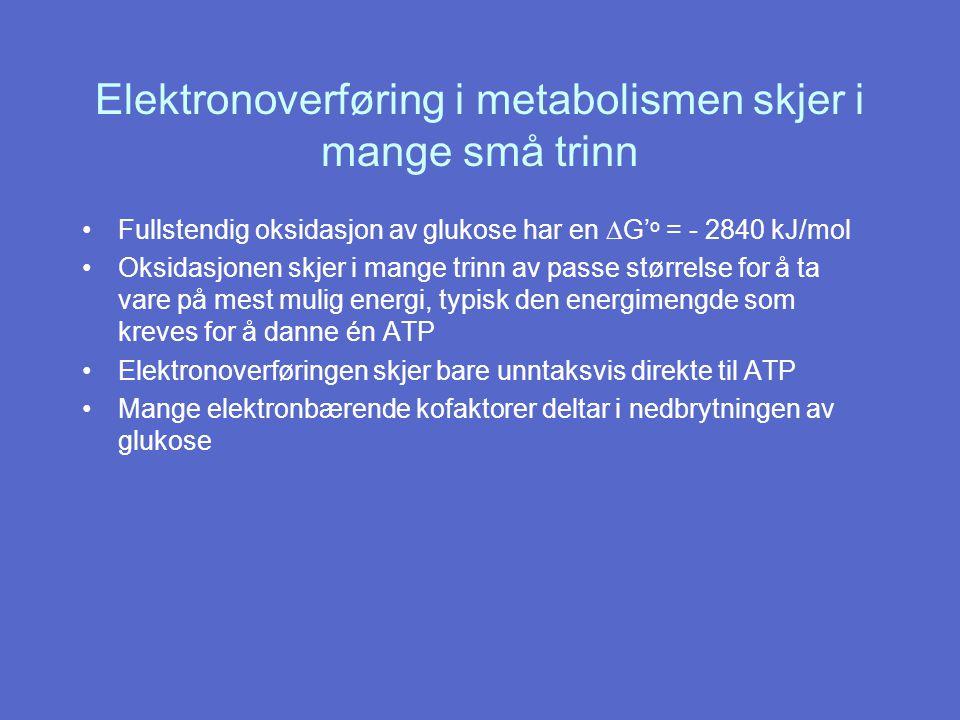 Elektronoverføring i metabolismen skjer i mange små trinn Fullstendig oksidasjon av glukose har en  G' o = - 2840 kJ/mol Oksidasjonen skjer i mange trinn av passe størrelse for å ta vare på mest mulig energi, typisk den energimengde som kreves for å danne én ATP Elektronoverføringen skjer bare unntaksvis direkte til ATP Mange elektronbærende kofaktorer deltar i nedbrytningen av glukose