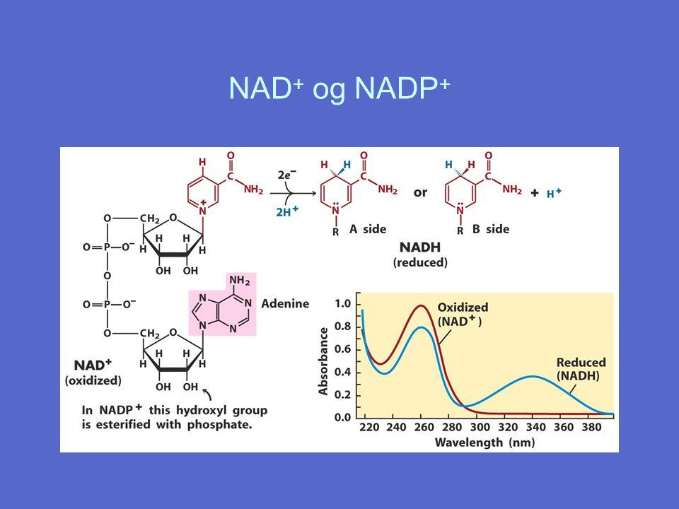 NAD + og NADP +