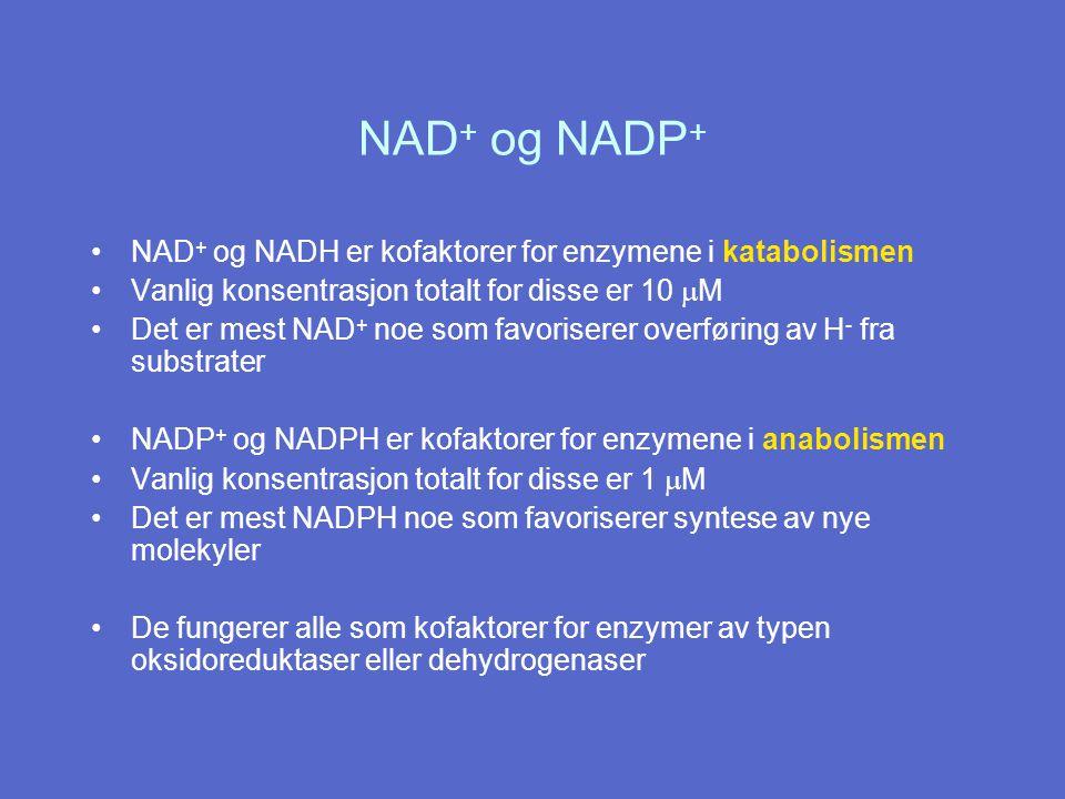 NAD + og NADH er kofaktorer for enzymene i katabolismen Vanlig konsentrasjon totalt for disse er 10  M Det er mest NAD + noe som favoriserer overføring av H - fra substrater NADP + og NADPH er kofaktorer for enzymene i anabolismen Vanlig konsentrasjon totalt for disse er 1  M Det er mest NADPH noe som favoriserer syntese av nye molekyler De fungerer alle som kofaktorer for enzymer av typen oksidoreduktaser eller dehydrogenaser