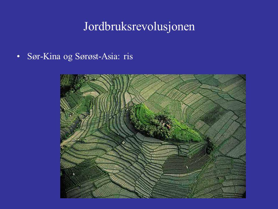 Jordbruksrevolusjonen Sør-Kina og Sørøst-Asia: ris