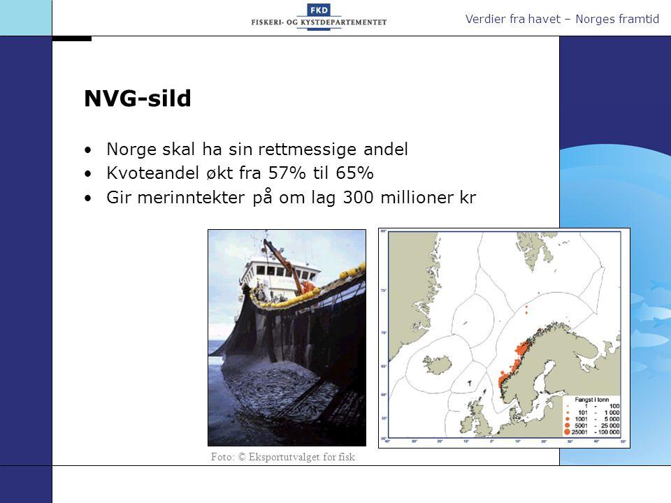 NVG-sild Norge skal ha sin rettmessige andel Kvoteandel økt fra 57% til 65% Gir merinntekter på om lag 300 millioner kr Foto: © Eksportutvalget for fisk