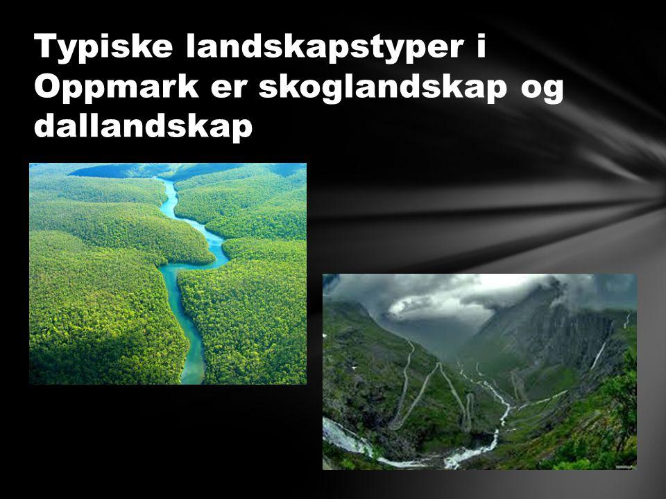 Typiske landskapstyper i Oppmark er skoglandskap og dallandskap