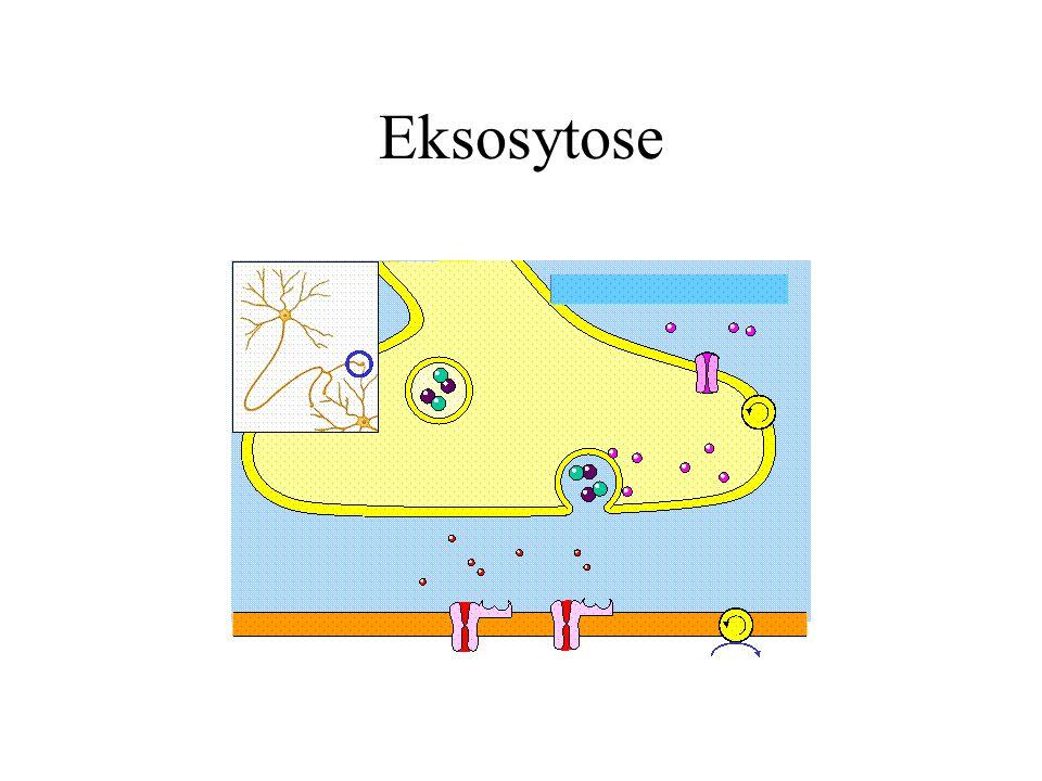 Eksosytose