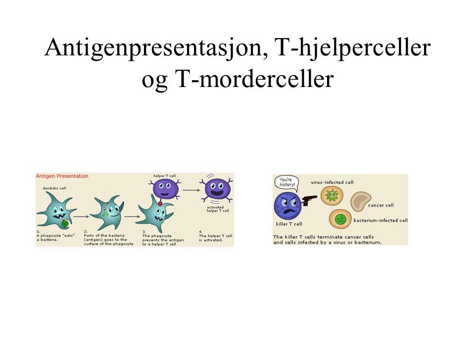 Antigenpresentasjon, T-hjelperceller og T-morderceller