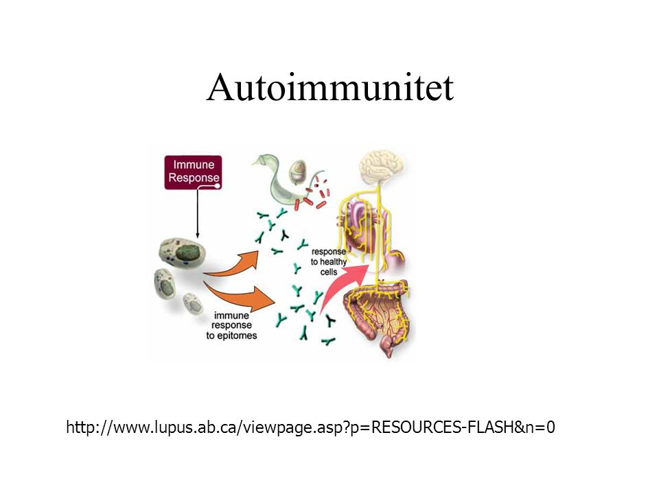 Autoimmunitet http://www.lupus.ab.ca/viewpage.asp?p=RESOURCES-FLASH&n=0