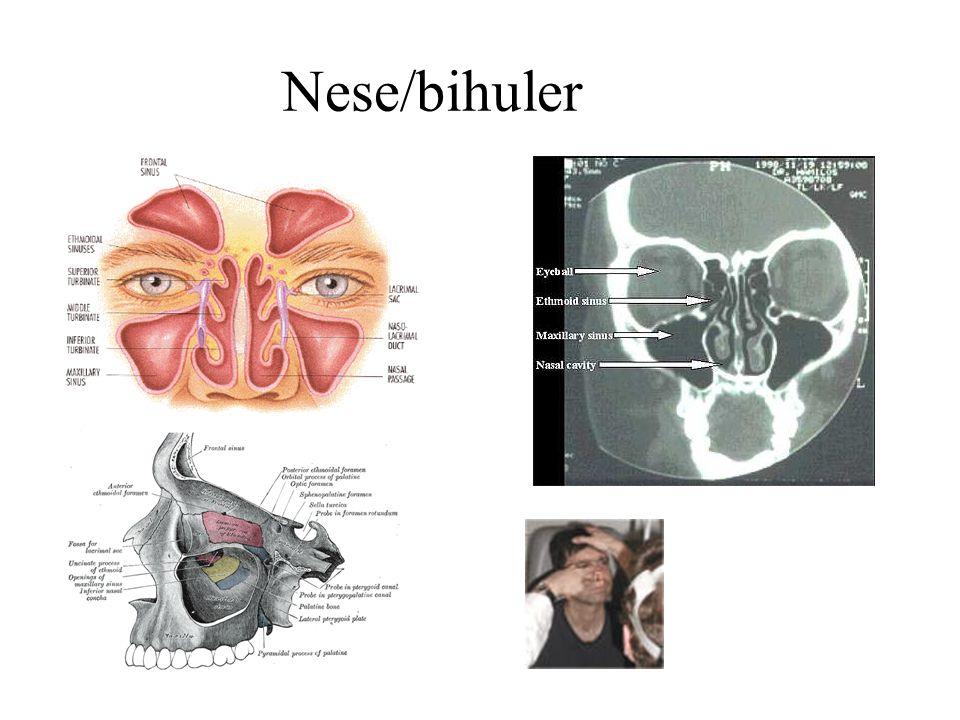 Nese/bihuler