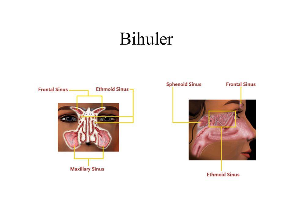 Bihuler
