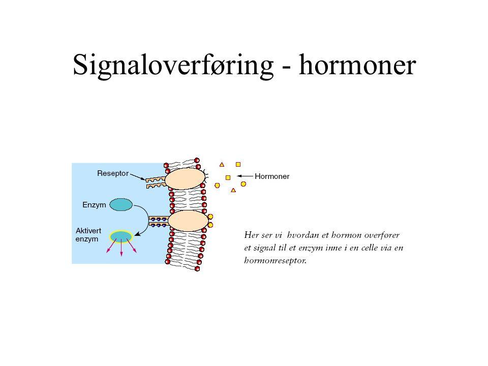 Signaloverføring - hormoner